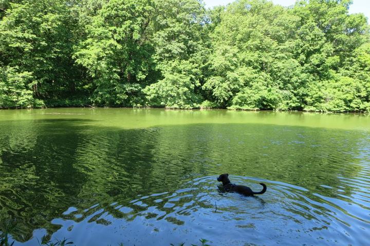 Pet Friendly Wyandotte County Lake Park Trails