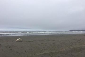 Pet Friendly Clam Beach Off Leash Area
