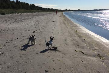 Pet Friendly Skateholm Beach