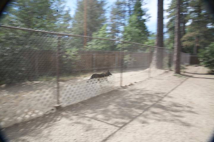 Pet Friendly Idyllwild Dog Park