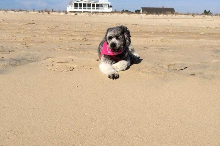 Pet Friendly Stuart Beach