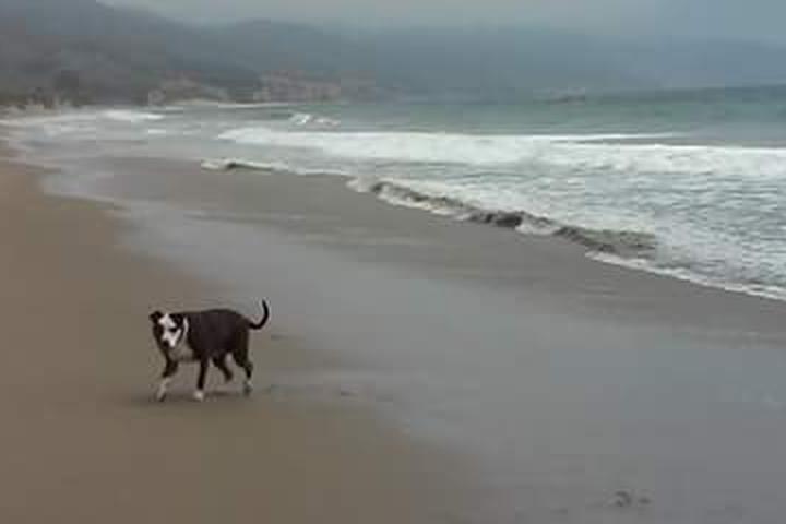 Pet Friendly Limantour Beach