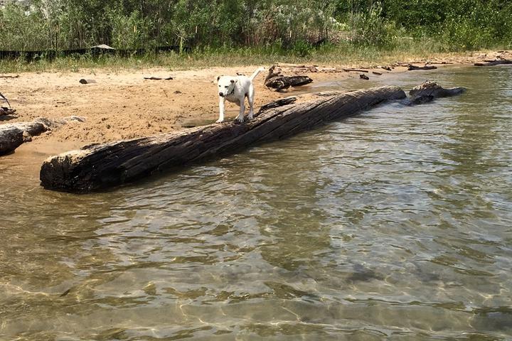 Pet Friendly Dog Beach Park