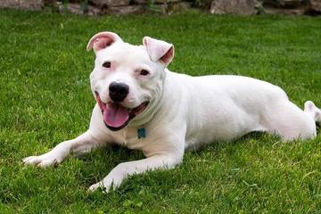 Pet Friendly Compassionate Animal Rescue Efforts
