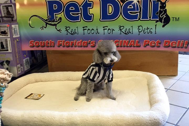 Pet Friendly Festival Flea Market Mall