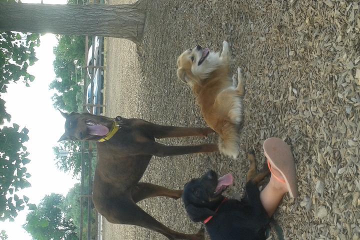 Pet Friendly Fairgrounds Dog Park