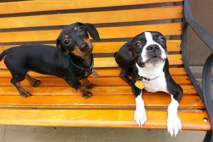 Pet Friendly Dog Days Lodge & Daycare