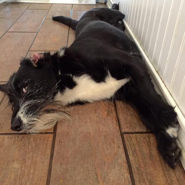 Dog Friendly Resorts Ny