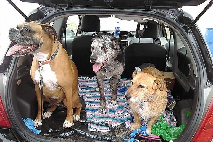 Pet Friendly Good Dogs Pet Sitting
