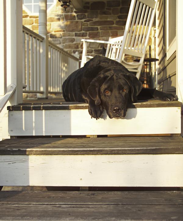 Hotels Burlington Vt Dog Friendly