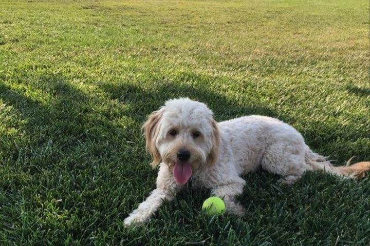 Pet Friendly Oakdale Dog Park