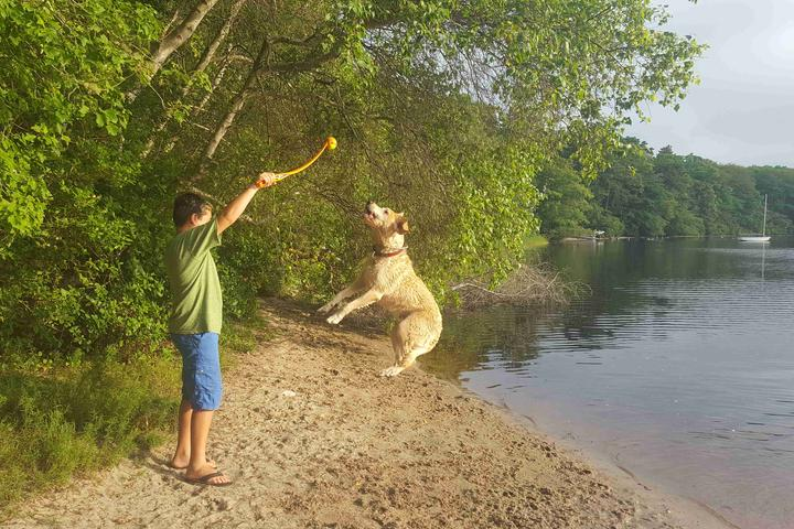 Pet Friendly Fresh Pond Dog Park