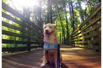 Pet Friendly Eureka Springs County Park