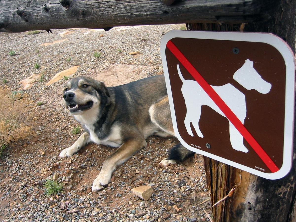 No Dogs?