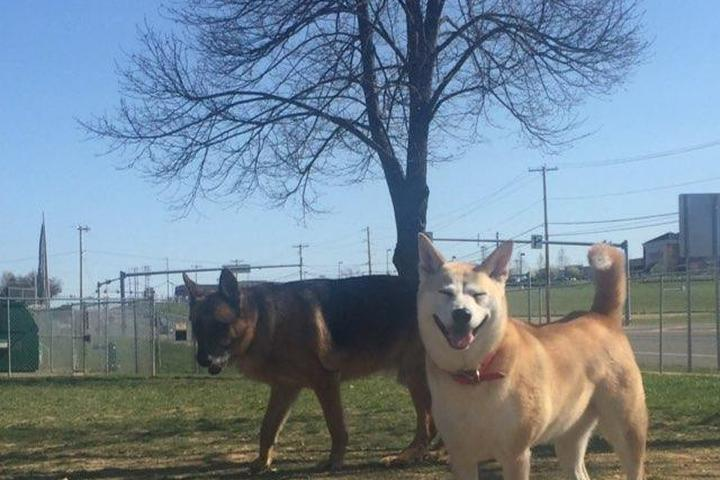 Pet Friendly Upper Macungie Township Dog Park
