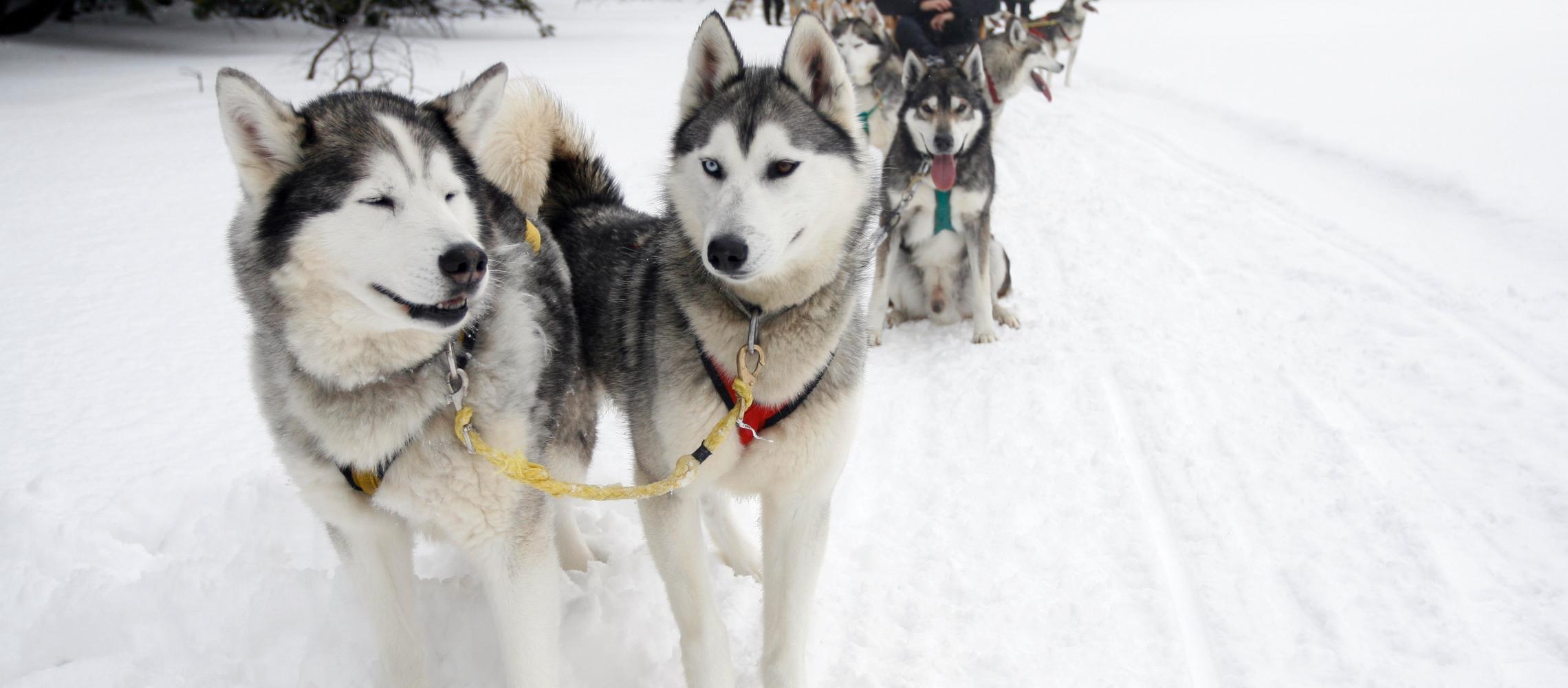 Dog Friendly Newfoundland - Bring Fido