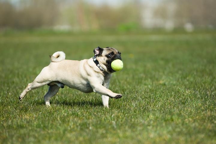Pet Friendly Yoyogi Park dog run