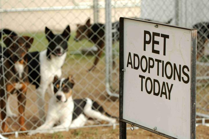 Pet Friendly Seattle Humane Society