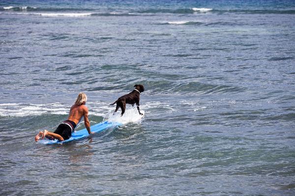 Big Dog Friendly Hotels San Diego