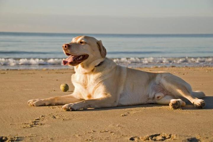 Pet Friendly Apollo Beach