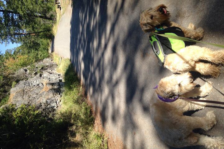 Pet Friendly Swan River Trail