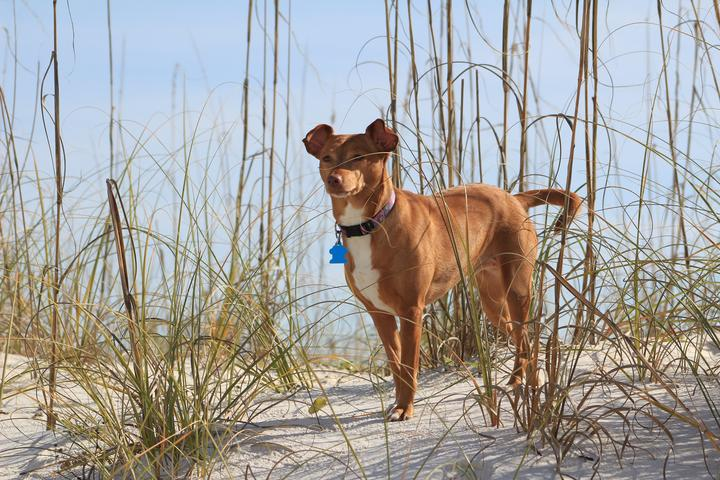 Pet Friendly Hatteras Island