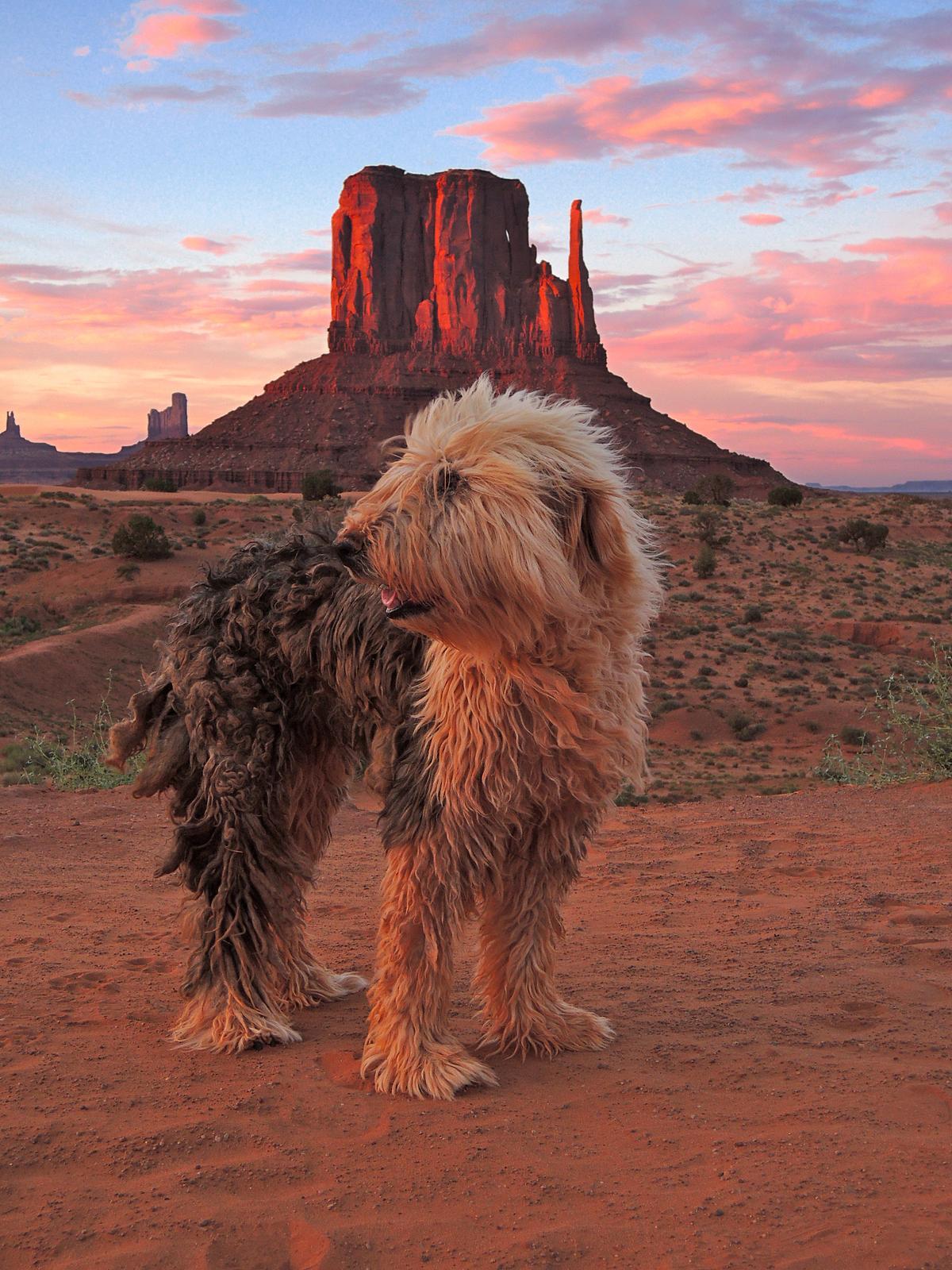 dog friendly monument valley  az