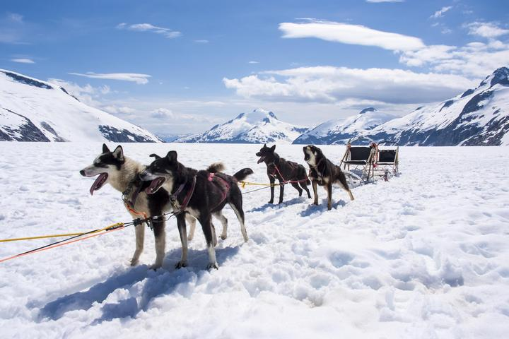 Dog Owner's Guide to Talkeetna, AK
