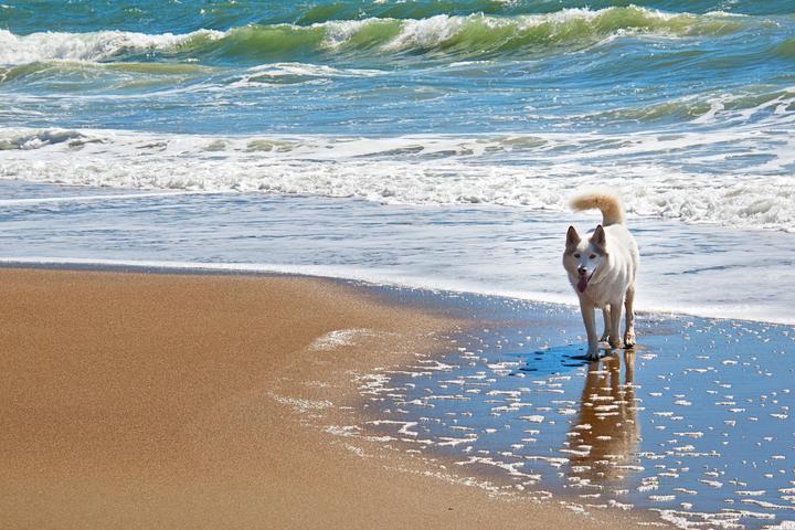 Pet Friendly Kinlock Beach