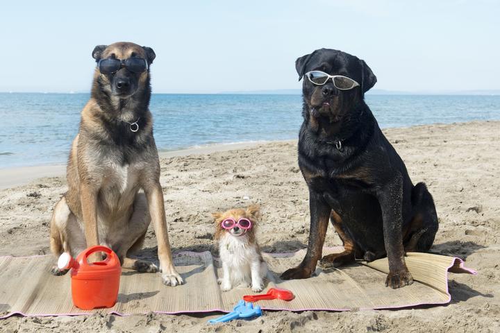 Pet Friendly Esplanade Beach