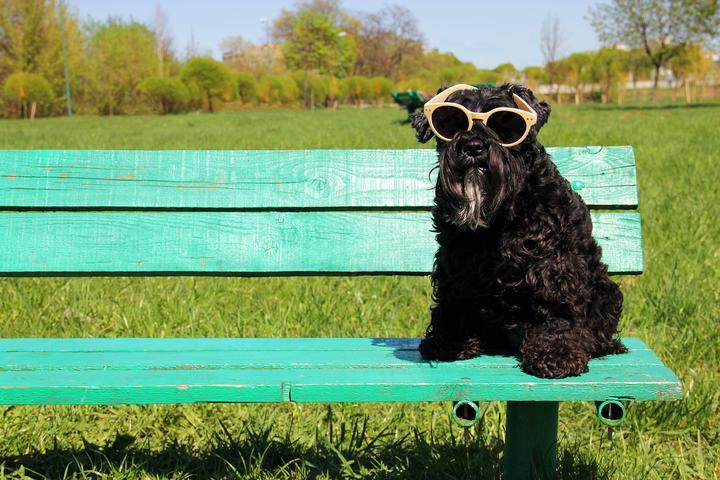 Pet Friendly Fitzgerald Park