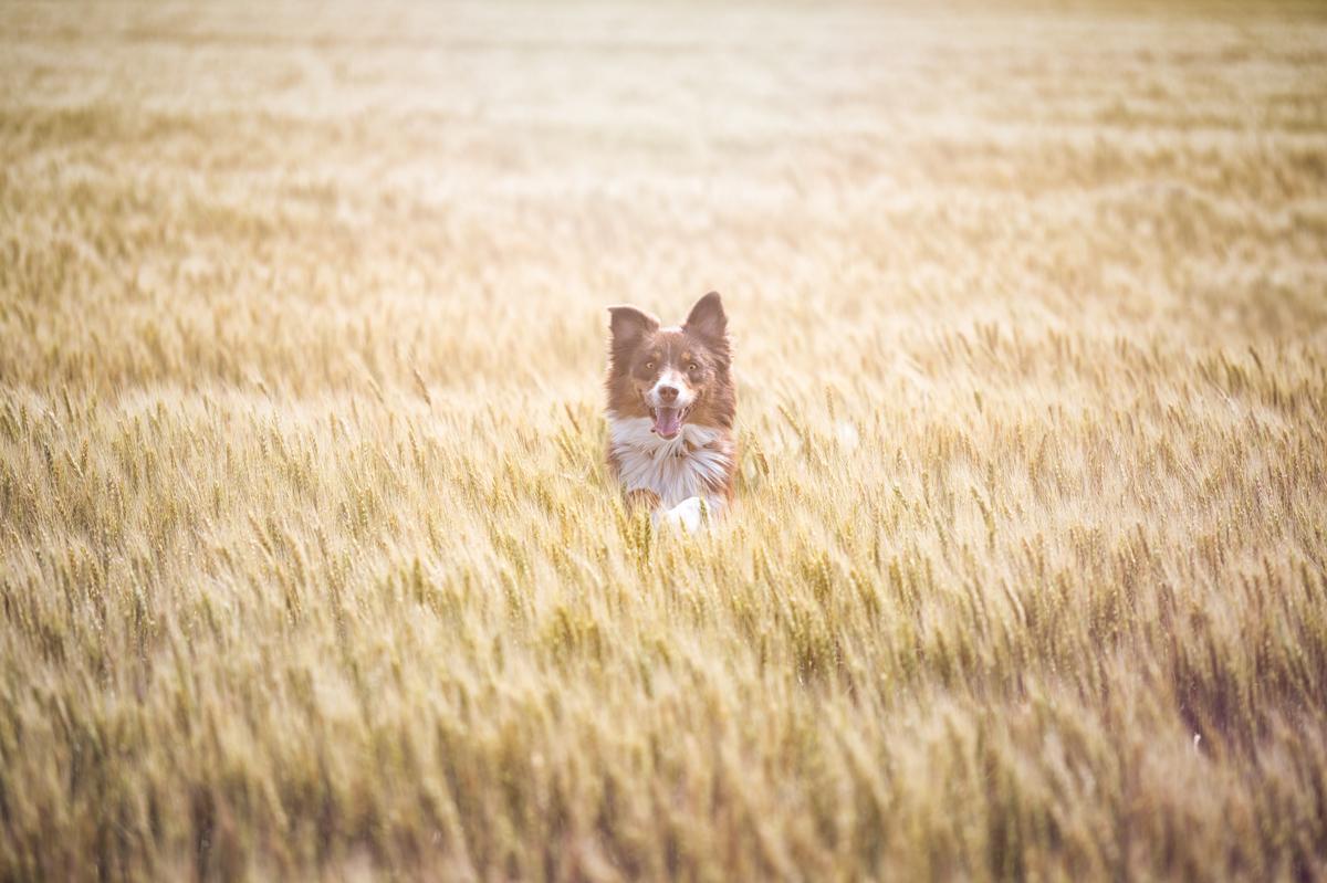 Dog Friendly Dodge City Ks