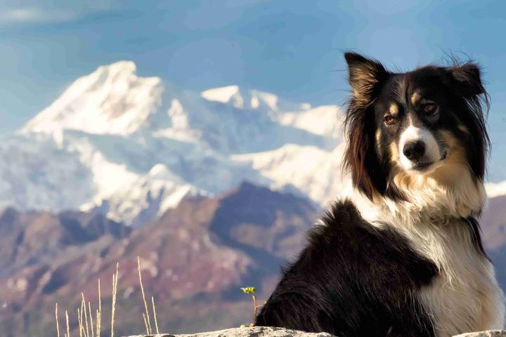 Dog Owner's Guide to Cantwell, AK
