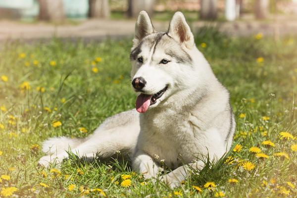 Dog Friendly Hotels Anchorage Alaska