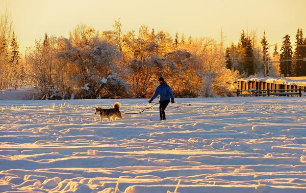 Alaska Dog Friendly Resorts
