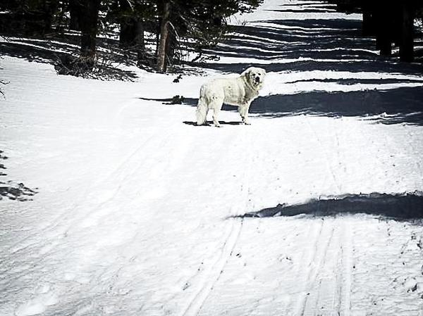 Dog friendly mammoth lakes ca for Mammoth mountain cabins pet friendly