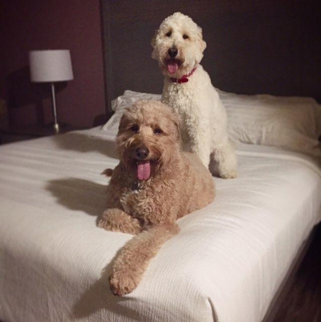 Murphy and Buff