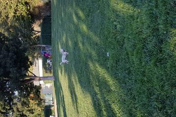 Pet Friendly Wardlaw Dog Park
