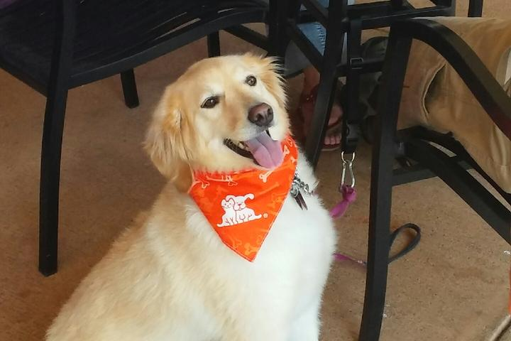 Pet Friendly Hard Rock Cafe Pigeon Forge