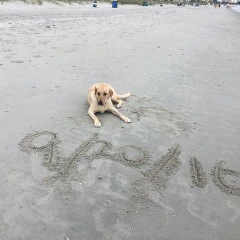 Myrtle Beach Resorts Dog Friendly