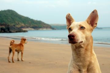 Pet Friendly Aksa Beach