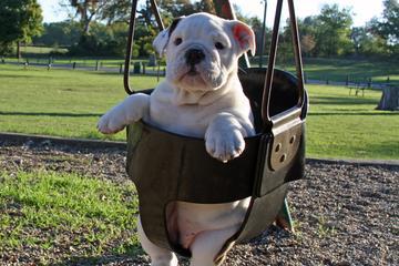 Pet Friendly Todd Beamer Dog Park