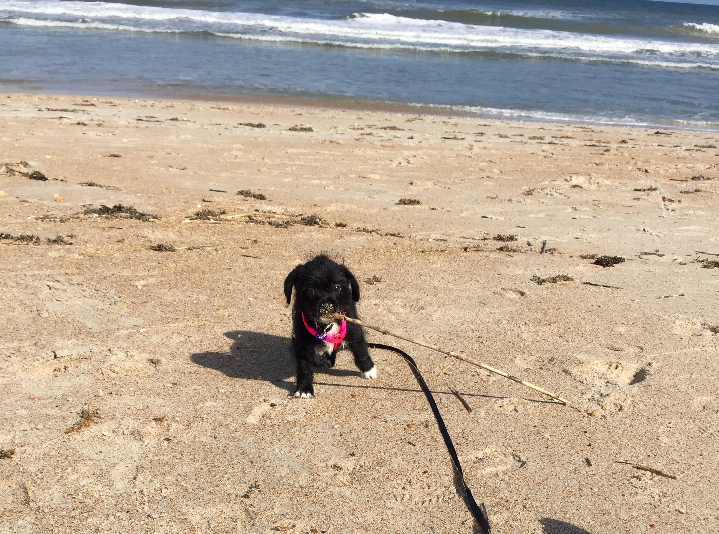 Is Ponte Vedra Beach Dog Friendly