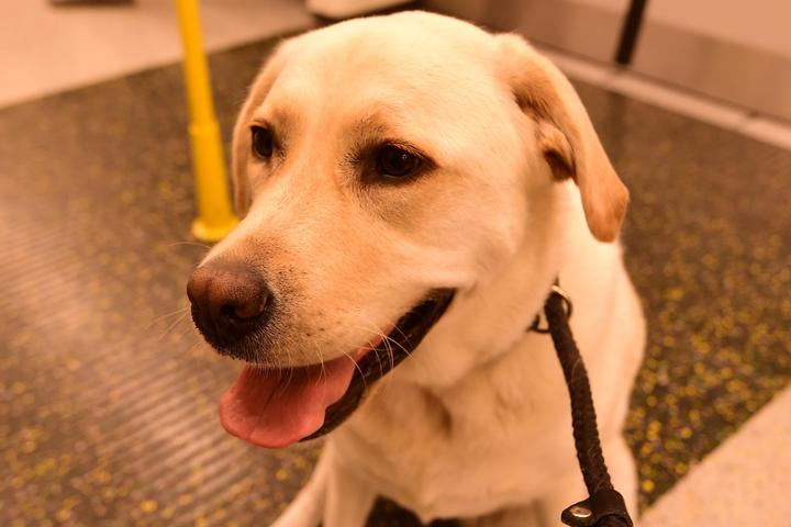 Pet Friendly Metro North Railroad
