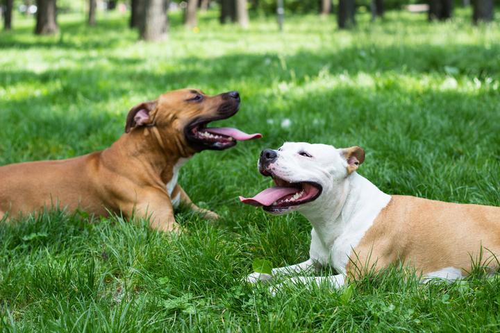 Pet Friendly Furnas Dog Park
