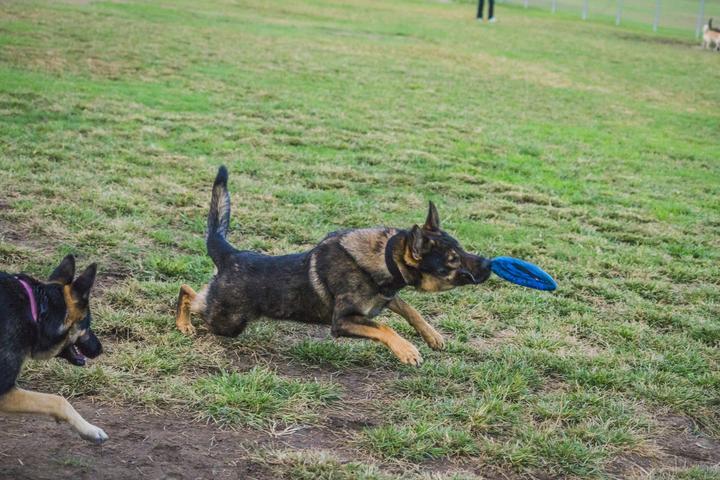 Dog Friendly Activities In Carlsbad Ca