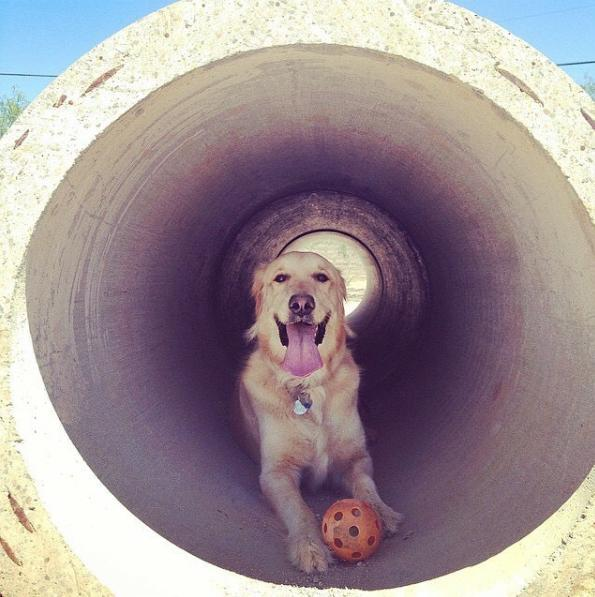 Tunnel Time at Smiling Dog Ranch