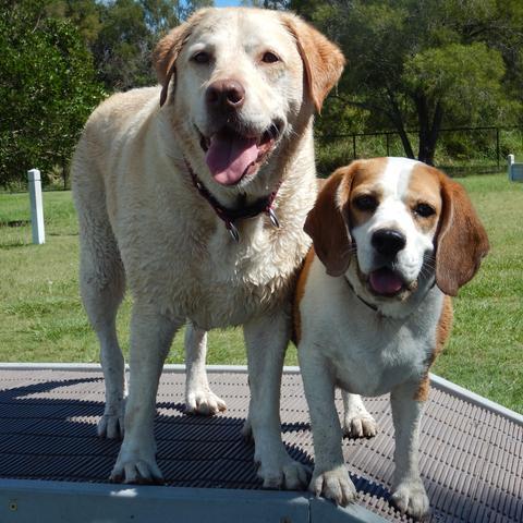 Dog Friendly Hotels Telluride Co