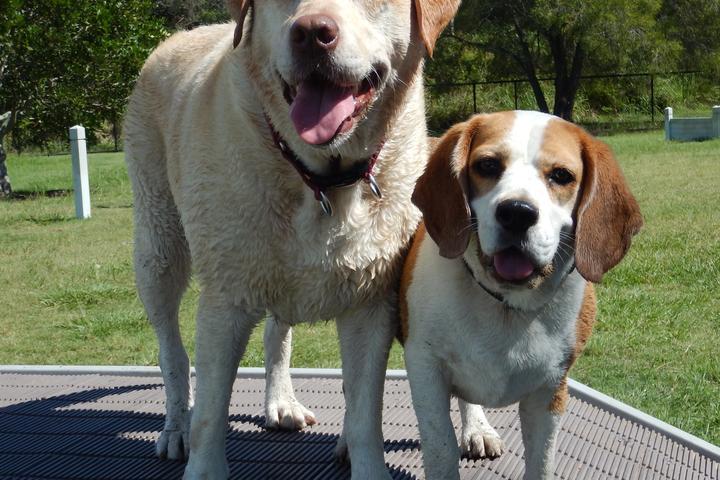 Pet Friendly Dr. Pauls Pet Care Center Dog Park