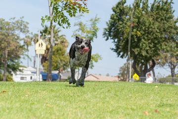 Pet Friendly Anne Fracassa Memorial Dog Park
